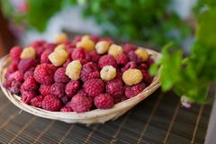 Basket of raspberries Royalty Free Stock Images