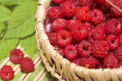 Basket of raspberries. On green background Stock Images