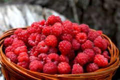 Basket with raspberries from the forest. Basket with ripe and healthy raspberries from the woods royalty free stock photography