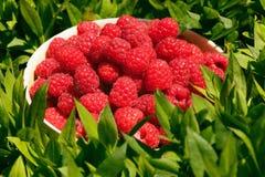 A basket of raspberries Royalty Free Stock Image