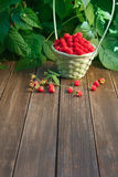 Basket with raspberries near bush on wooden table in garden. Basket full of raspberries stay on wooden table outdoors at raspberry bush with green leaves Royalty Free Stock Image
