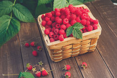 Basket with raspberries near bush on wooden table in garden Stock Photography