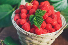 Basket with raspberries near bush on wooden table in garden. Wicker basket full of raspberries closeup on wooden table outdoors at raspberry bush with green Stock Photos