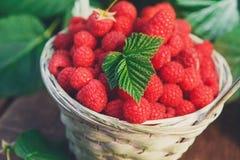 Basket with raspberries near bush on wooden table in garden Stock Photos