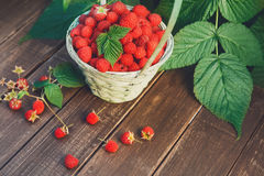 Basket with raspberries near bush on wooden table in garden Royalty Free Stock Photos