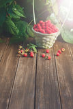 Basket with raspberries near bush on wooden table in garden. Wicker basket full of raspberries with copy space on wooden table, outdoors near raspberry bush with Stock Photos
