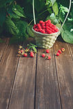Basket with raspberries near bush on wooden table in garden. Wicker basket full of raspberries with copy space on wooden table, outdoors near raspberry bush with Stock Photography