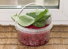 Basket with raspberries. Basket with a raspberry leaves sheltered Stock Images