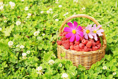 Basket with raspberry and flowers on green grass Royalty Free Stock Photography