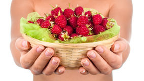 Basket with raspberry in woman hands. Isolated on white Royalty Free Stock Photography