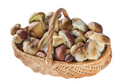 Basket with real wild mushrooms Stock Photos