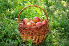 A basket of red apples Royalty Free Stock Images