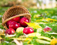 Basket of red apples Royalty Free Stock Photography