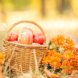 Basket with red apples in autumn Stock Photo