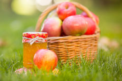 Basket with red apples in autumn Stock Photos