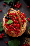 Basket with Red and Black currant with leaves. Royalty Free Stock Images
