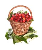 Basket with a red cherry Stock Images