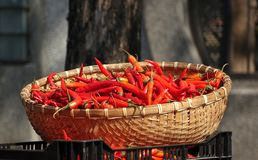 Basket with Red Chili Peppers Royalty Free Stock Image