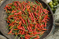Basket of Red Chilis Royalty Free Stock Photo