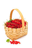 Basket with red currant Stock Image