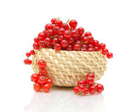 Basket with red currant on white background Stock Images
