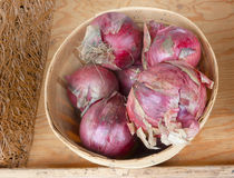 Basket of red onions Stock Photography