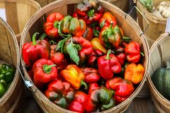 Basket with red peppers Royalty Free Stock Photo