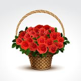 Basket of Red Roses Isolated. Vector Illustration of Basket of Red Roses Isolated Royalty Free Stock Photos