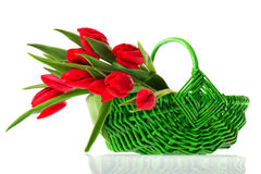 Basket red tulips Stock Photography