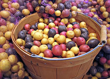 Basket of Red, White and Blue Potatoes. This produce stock image is a large basket of red, white and blue whole uncooked, raw potatoes.  Some have netted bags Stock Photos