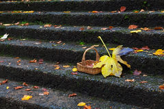 Basket with red and yellow autumn leaves Royalty Free Stock Image