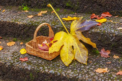 Basket with red and yellow autumn leaves Stock Images