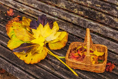 Basket with red and yellow autumn leaves on wooden bench Stock Photo