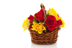 Basket red and yellow roses Royalty Free Stock Image