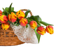 Basket of Red and Yellow Tulips with Lace. Basket of lovely red and yellow tulips on lace, presented against white background with ample room for copy Royalty Free Stock Photo