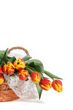 Basket of Red and Yellow Tulips with Lace Vertical. Basket of lovely red and yellow tulips on lace, presented against white background with ample room for copy Royalty Free Stock Image