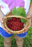 Basket of redcurrant with green leaves Stock Images