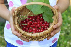 Basket of redcurrant with green leaves Stock Photo
