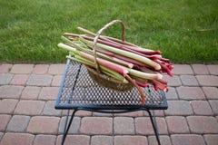 Basket of rhubarb on mesh table & pavers stock photography