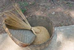 Basket with rice. Stock Photos