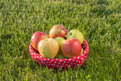 Basket of ripe apples on the grass Stock Photo