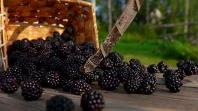 Basket with ripe blackberry falls on a wooden table. Berries fall on the table. Slow motion outdoors against birch stock video footage