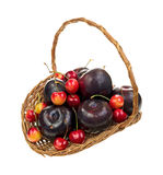 Basket of ripe cherries and plums Royalty Free Stock Photography