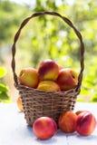 Basket of ripe fruit nectarines Stock Photos
