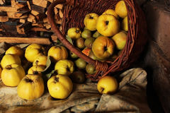 A basket of ripe juicy pear and quince apples Royalty Free Stock Image