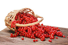 Basket of ripe juicy red currant Stock Photos