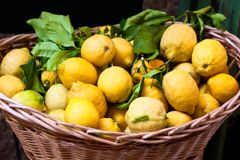 Basket with ripe lemons Royalty Free Stock Image