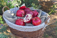 Basket of ripe pomegranates Stock Photo