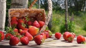 Basket with ripe strawberry falls on a wooden table stock video