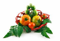 Basket with Ripe Tomatoes (Still Life) Isolated Stock Photos